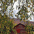 A Peak Of Fall Red Barn by Terry DeLuco