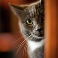 A Peek by Mike Reid