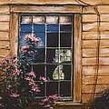 A Peek Through The Window by Diane Strain