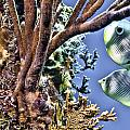 Two Butterfly Fish And Coral Reef by Paula Porterfield-Izzo