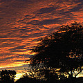 A Phoenix Sunset by Tom Janca