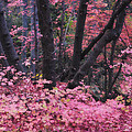 A Pink Autumn  by Saija  Lehtonen