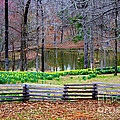 A Place Of Peace Among The Daffodils by Kathy  White