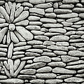 A Plant In The Wall by Shaun Higson