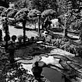 A Pond In An Ornamental Garden by Gottscho-Schleisner