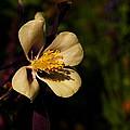 A Pretty Flower In The Sun by Jeff Swan