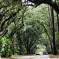 A Pretty Tree Covered Road Somewhere On Hilton Head Island by Kim Pate
