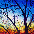 A Primary Sunset by Patricia Allingham Carlson