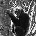 A Primate by Heather L Wright
