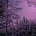 A Quiet Snowy Night by Lydia Holly