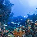 A Quiet Underwater Day by Sandra Edwards