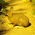 A Rabbit In My Path by Jeff Swan