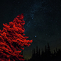 A Red Tree With Starry Sky by Brian Xavier Photography