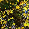 A Reflection Amongst The Leaves by Jeff Swan