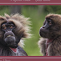 A Reflective Moment    Gelada Baboons by Stephen Barrie