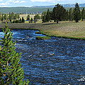 A River Runs Through Yellowstone by Laurel Powell