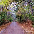 A Road In Autumn. by Dipali S