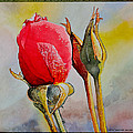 A Rose Awaitingtwo More Roses by Andre Salvador