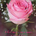 A Rose By Any Other Name Is Still A Rose by Gwen Gibson