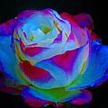 A Rose Enhanced by Ben Upham III