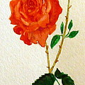 A Rose For Rosa by Patricia Blanton