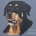 A Rottie Named Thor by Ambre Wallitsch