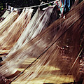 A Row Of Mosquito Netting Over Sleeping by Ron Koeberer