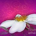 A Royal Rose by Judi Bagwell