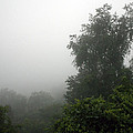 A Rural Pennsylvania Mist by Cora Wandel