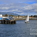 A Sailing Yacht Passes The Wharf In Sidney Harbour by Louise Heusinkveld