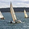 A Sailing Yacht Rounds A Buoy In A Close Sailing Race by Louise Heusinkveld