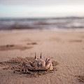 A Sand Crab Looks Out Over The Andaman by David Zentz