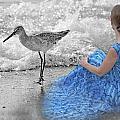 A Sandpiper's Dream by Betsy Knapp