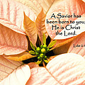 A Savior Has Been Born To You He Is Christ The Lord by Jill Lang