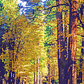 A Shady Drive Through Yosemite by Susan Eileen Evans