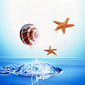 A Shell And Two Starfish Floating by Panoramic Images