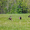A Shot Of Wild Turkey by Nick Kirby