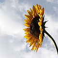 A Side Of Sunflower by Neal Eslinger