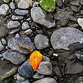 A Sign Of Fall by Kyle Lavey