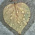 A Simple Leaf by Martha Nelson