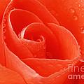 A Single Bloom 3 by Wendy Wilton