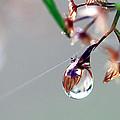 A Single Dewdrop by Carolyn Fletcher