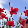 A Sky Full Of Poppies by Ross G Strachan