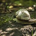 A Snail's Pace by CJ Schmit