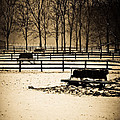 A Snow Covered Horse Farm by Sarah  Cafaro