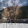 A Snowy Night by Image Takers Photography LLC - Carol Haddon