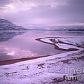 A Snowy Shore by Tara Turner