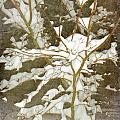 A Snowy Tree by Alys Caviness-Gober