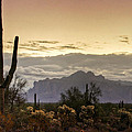 A Sonoran Morning  by Saija  Lehtonen