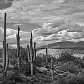 A Sonoran Winter Day In Black And White  by Saija  Lehtonen
